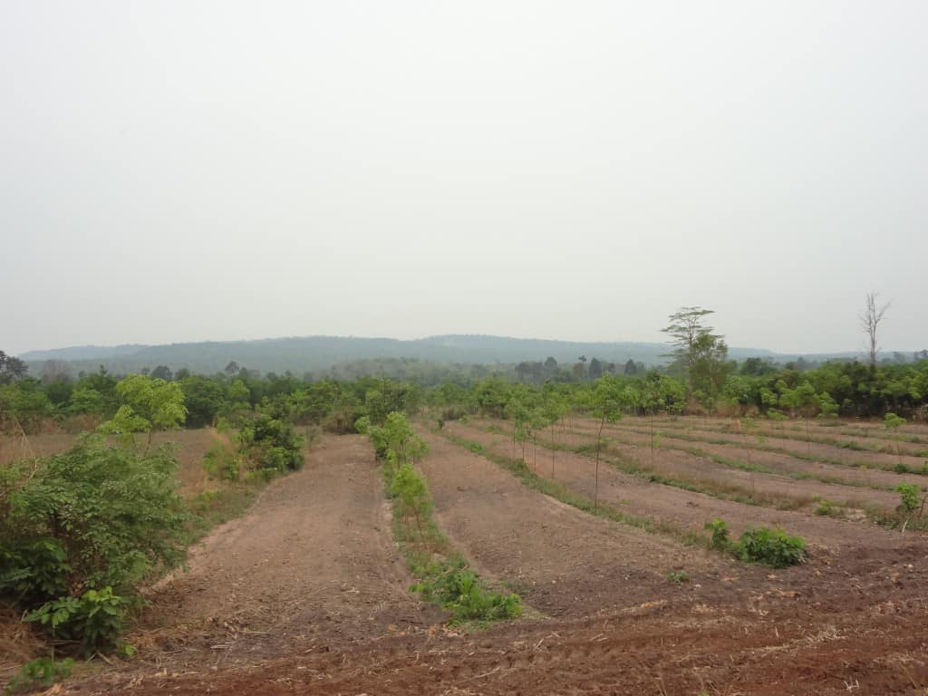Somewhere in these mountains are the ruins of Preah Vihear
