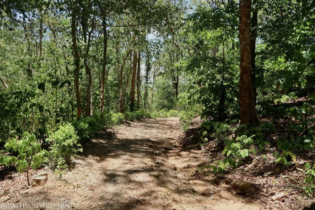 Example of roads within Choeng Doi Suthep Wildlife and Nature Education Center.