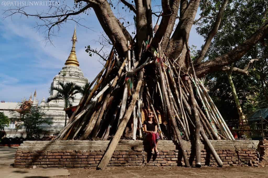 The bodhi tree found at Wat Kanthom