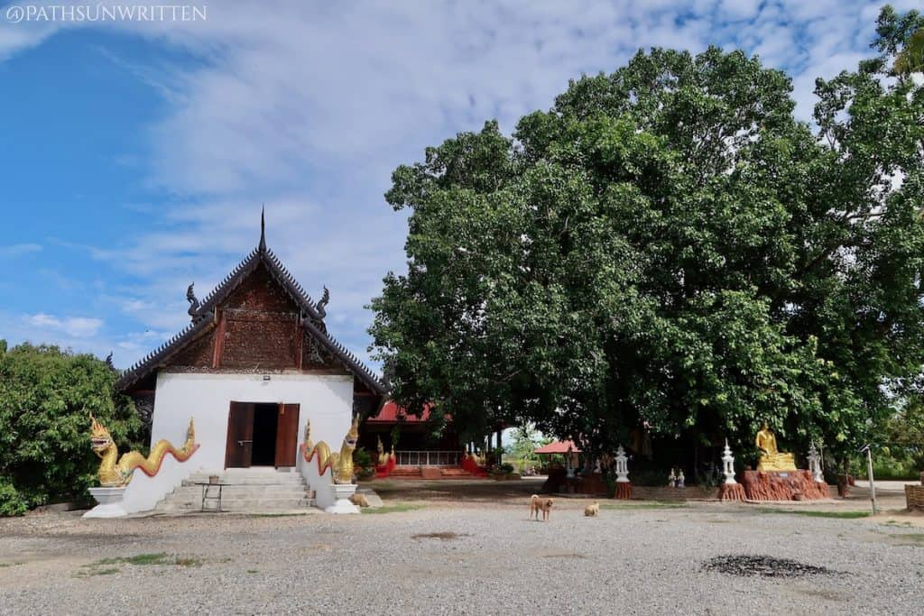The traditional (possibly renovated) viharn and bodhi tree of Wat Sadue Muang